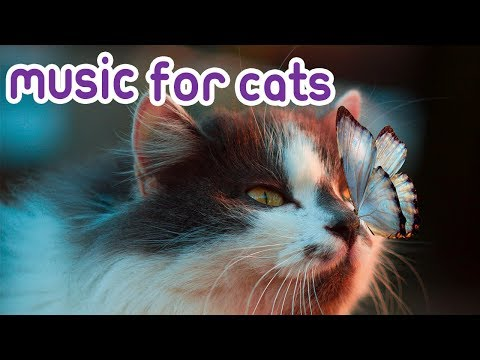 Cat Music: 15 Hours Relaxing Music For Your Kitten!