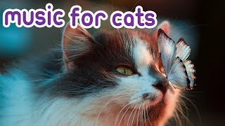 Cat Music 15 Hours Relaxing Music For Your Kitten!
