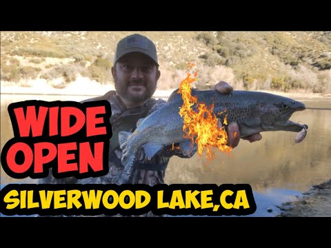 Silverwood Lake | Wide Open Trout Report | Jan 2020