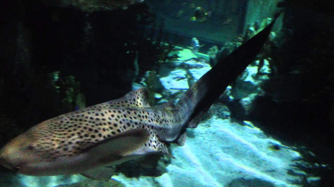 Moody Gardens Aquarium Pyramid Galveston TX YouTube