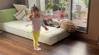娘の好物を渡されても迷惑な猫 ノルウェージャンフォレストキャット A cat that seems to be annoying as a gift from her daughter