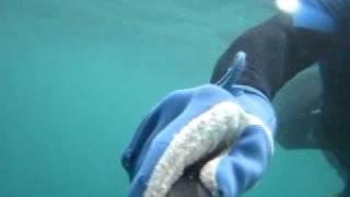 vuclip pesca de guaricema itapua salvador bahia