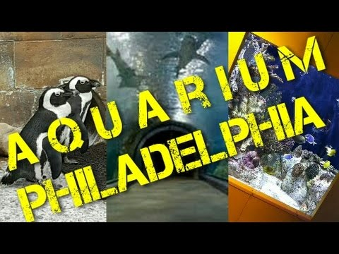 Aquarium of Philadelphia Pennsylvania / Аквариум Филадельфии Пенсильвания / American dream