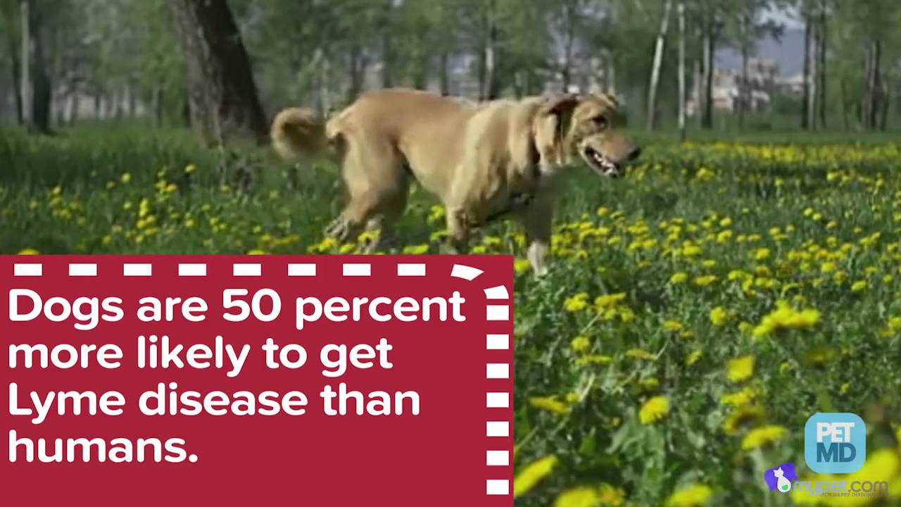7 Facts About Deadly Tick Diseases