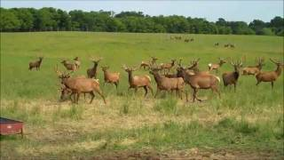 Casey Visits an Elk Farm