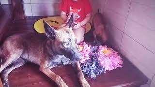 Нюхательный коврик для собак делаем и говорим о полезности