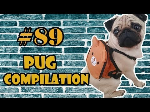 2018 NEW ! Pug Compilation 89 - Funny Dogs but only Pug Videos | Instapugs