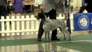 Group And Best In Show Judging At Grand Rapids (mi) Kennel Club Show 11/11//2012