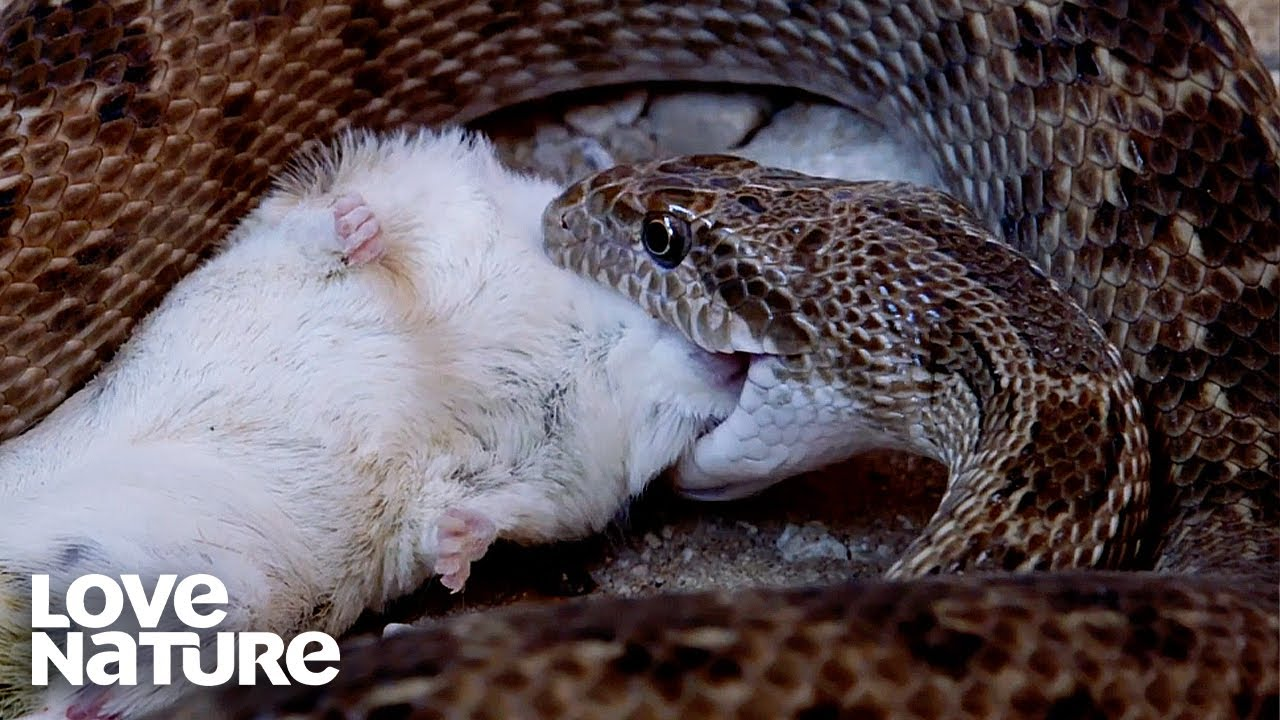 There's No Escaping This Snake's Death Grip