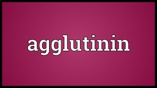 Agglutinin Meaning