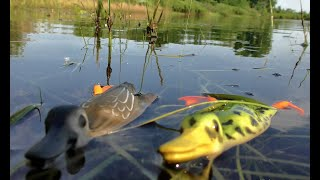 ЗАКИНУЛ ПРИМАНКУ В ТРАВУ ТАКОГО НЕ ОЖИДАЛ Крупный окунь щука Рыбалка мечты на малой реке