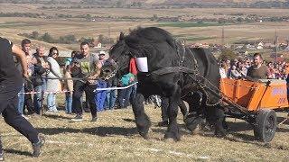 Concurs cu cai de tractiune Tropote in tara vinului Micesti, Alba - 2018