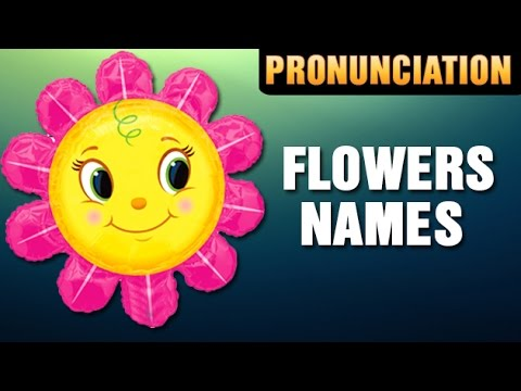 Learn Flowers And Their Names Rose Sunflower Lotus Youtube