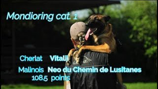 "MR1 ""Mafia"". Cherlat Vitalii Mondioring cat. 1 Malinois Neo du Chemin de Lusitanes  108.5 points"