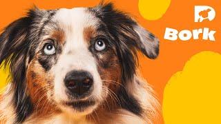 DOGTV Stimulation