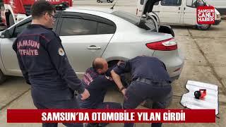 Samsun'da otomobile yılan girdi!