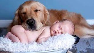 最佳搞笑猫和狗爱宝宝。编辑|新