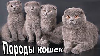 Кошки, Породы фото, Названия пород