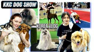KKC выставка собак в Корее/KKC Korea dog show/KOREA VLOG
