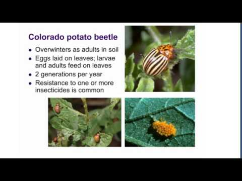 Common Garden Insect Pests