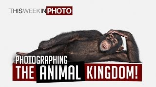 Photographing the Animal Kingdom - with Randal Ford