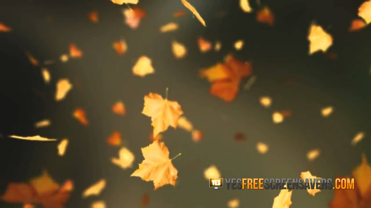 falling leaves screensaver perfect autum screensavers youtube