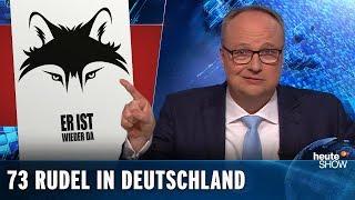 Wölfe in Deutschland: Wir brauchen mehr Sachlichkeit in der Debatte