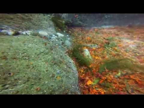 Our Scuba Trips | Diving Fanore Ireland 2014