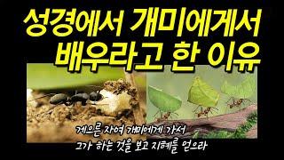 성경에서 '개미'를 배우라고 한 이유.