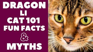 Dragon Li Cats 101 : Fun Facts & Myths