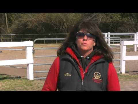 How to Start a Horse Breeding Business