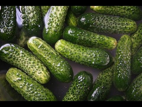 HOW TO PICK, PICKLE AND EAT YOUR GHERKINS CUCUMBERS OR CUCAMELONS IN 24 HOURS