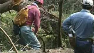 日本最古の人工林・歴史の証人【かわかみ村・下多古村有林】第4回