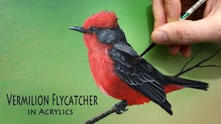 Acrylic painting time lapse of a vermilion flycatcher