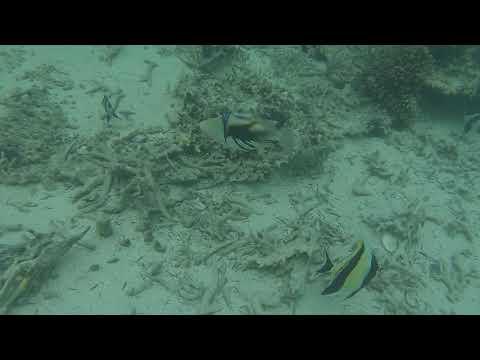 RK- Mauritius corals-2015