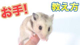 """【1万円】ハムスターの""""3階建""""大豪邸を作る!!! アイス棒でDIY1万円..."""