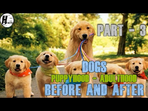 PART -3 | DOGS. Puppy - Adult | BEFORE AND AFTER