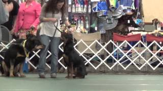 American Rottweiler Club National Rescue Parade 4/25/14