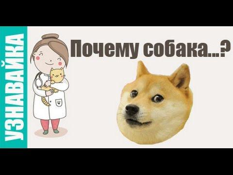 Почему собака ездит на попе, лижется и плачет? #Узнавайка