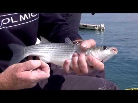 Italian Fishing TV - Colmic - Cefali a bolognese