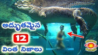 Top 12 Unbelievable Facts That You Never Know   Top Most Amazing Facts by Planet Telugu
