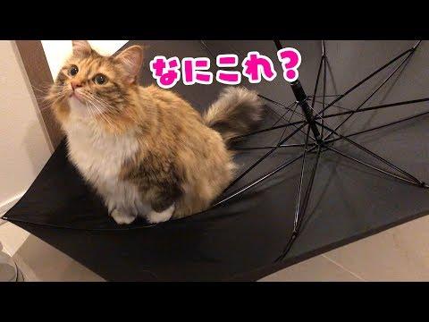 傘でアスレチックみたいに遊ぶ猫