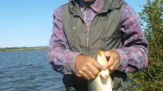 Рыбалка Тверь - Бежецк. А рыбак рыбака узнает издалека