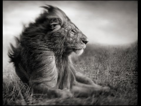 Photographer Spotlight: Nick Brandt