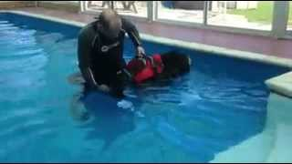 Dog Hydrotherapy At The Canine Club