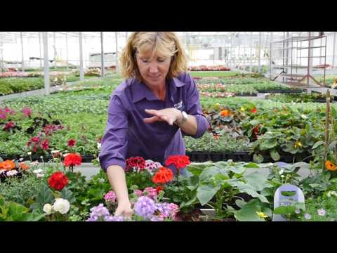 Pentland Plants Looking Good Video 16th June 2017