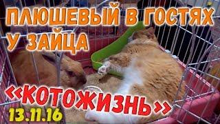 Плюшевый Кот в гостях у Зайца ❖ КОТОЖИЗНЬ! 13.11.2016