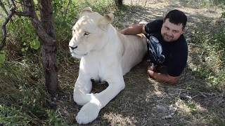 ВЕСЕЛЫЕ ТУРИСТЫ в прайде льва-вожака !