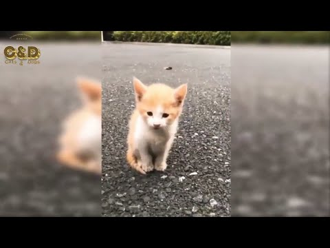 Funny Cats And Dogs 2019 _dog_ Funny (Pet) Animals _ Dogs and Cats Funny Vines _ Cute Cat and Dog