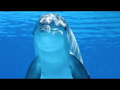 Dolphin Sounds & Whales Singing in the Ocean
